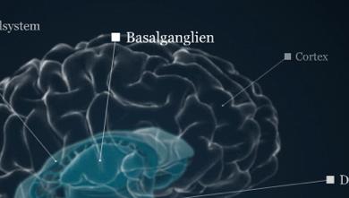 Das Gehirn.Info